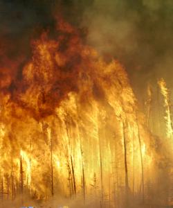 Apara Ekadasi-ForestFire